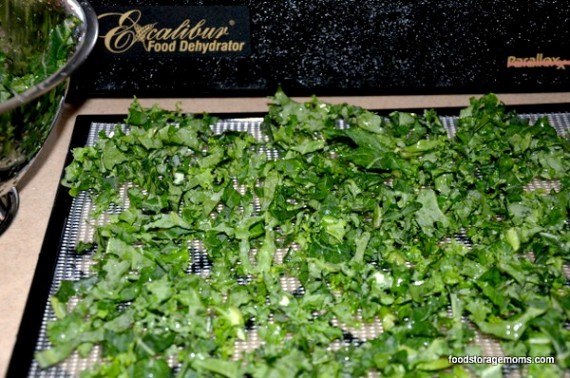 How To Dehydrate Kale