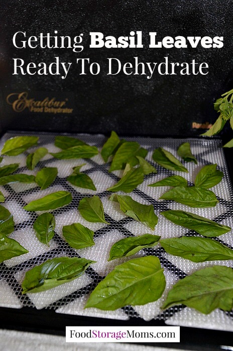 Dehydrating Basil Leaves