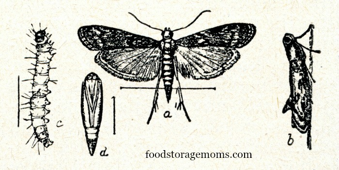 How To Get Rid Of Pantry Moths In Your Kitchen by FoodStorageMoms.com